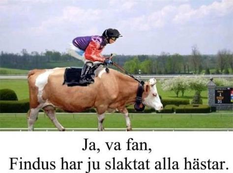 hästbrist
